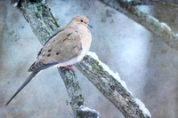 Dove on a Snowy Branch