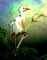 Cattle Egret in Breeding Color Painting
